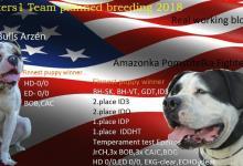 Inzercia psov: Pripravované krytie 2018