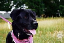 Inzercia psov: Rita- rada sa mojká a rozdáva pusinky