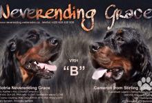 Inzercia psov: Gordon Seter