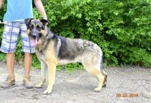 Inzercia psov: Viero rezervovaný
