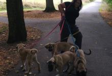 Inzercia psov: Rychlý odběr - výrazná sleva