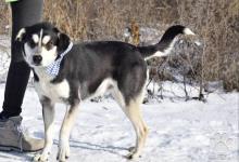 Inzercia psov: Buddy dobrý kamarát rodinný psík kríženec