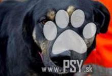 Inzercia psov: Zabina pokojná fenočka do milujúcej rodiny
