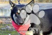 Inzercia psov: Cassidy milunká pokojná fenka do milujúcej rodiny
