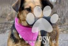 Inzercia psov: Zoja milučká fenočka do milujúcej rodiny