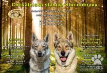 Inzercia psov: Rezervace štěňat československého vlčáka