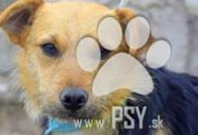 Inzercia psov: Ibino milučký psíček do milujúcej rodiny