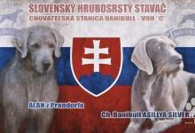 Inzercia psov: Slovenský hrubosrstý stavač šteniatka na predaj