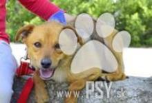Inzercia psov: Fedor úžasný spoločenský psíček kríženec