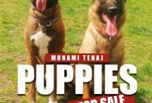 Inzercia psov: šteniatka Belgického Ovčiaka Malinois