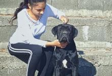 Inzercia psov: Cane Corso Top Mužjak