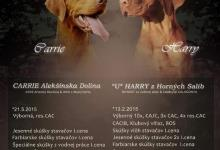 Inzercia psov: Madarska vyzla