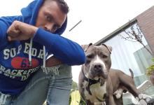 Inzercia psov: Staffordshire bull terrier