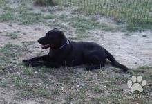 Inzercia psov: Darujem psíka len do láskavých rúk