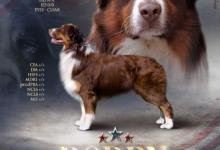 Inzercia psov: IMPORT USA