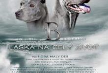 Inzercia psov: Thai Ridgeback Puppies