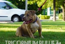 Inzercia psov: Tricornium bulliez