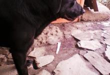 Inzercia psov: Darujem