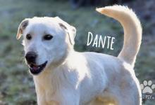 Inzercia psov: Dante, zlomená dušička