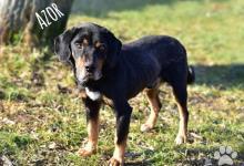 Inzercia psov: AZOR, priateľský jedináčik