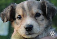 Inzercia psov: Šteniatka na adopciu