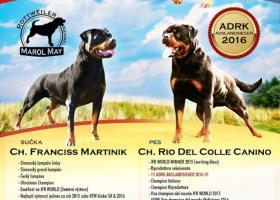 Rottweiler/ rotvajler / - šteniatka s PP