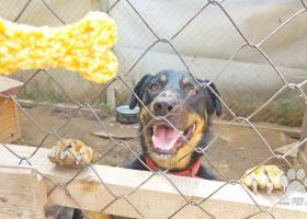 Archi- verný psík hľadajúci domov