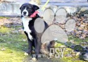 Kenyo milunký psí spoločník kríženec