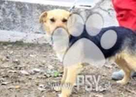 Ibino milučký psíček do milujúcej rodiny