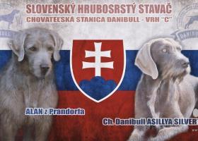 Slovenský hrubosrstý stavač šteniatka na predaj