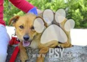 Fedor úžasný spoločenský psíček kríženec